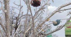 Decoratieve vogelkooien stock footage