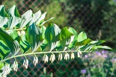 Decoratieve witte bloemen in de zonstraal royalty-vrije stock afbeeldingen