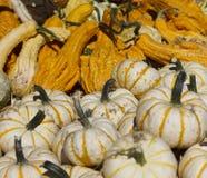 Decoratieve witte en oranje decoratieve Pompoenen en Gords Stock Afbeeldingen