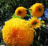 Decoratieve zonnebloemen Stock Afbeeldingen