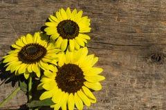 Decoratieve zonnebloemen op de houten achtergrond stock fotografie