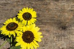 Decoratieve zonnebloemen op de houten achtergrond stock afbeeldingen