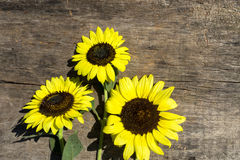 Decoratieve zonnebloemen op houten achtergrond royalty-vrije stock fotografie