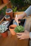 Decorating Succulent Pots Stock Images
