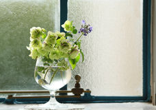 Decorating flowers at the window Royalty Free Stock Images