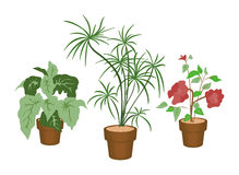 Decorating Plants Royalty Free Stock Photography