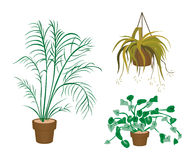 Decorating Plants Icons Royalty Free Stock Image