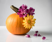 Decorating a Pumpkin with Fresh Flowers Royalty Free Stock Photo
