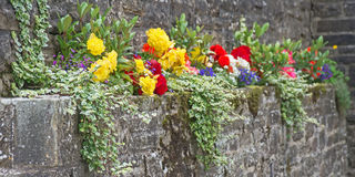 Decorating a stone wall. Colorful flowers growing on a ledge of an old stone wall; covering boring gray color of stones stock image