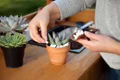 Decorating Succulent Pots Royalty Free Stock Photography