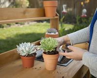 Decorating Succulent Pots stock photos