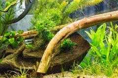 Decoration in aquarium Stock Photography