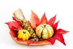 Decoration in autumn Royalty Free Stock Photo