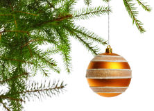 Decoration ball on fir branch. White background Royalty Free Stock Image