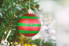 Decoration ball hanging on pine tree Royalty Free Stock Images