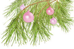 Decoration balls on pine branch, isolated on white Stock Photography