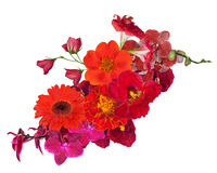 Decoration with bright red flowers isolated on white Stock Photos