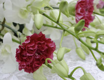 Decoration carnation and white orchid Royalty Free Stock Photo