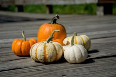 Decoration for Celebration. Pick the cutest looking Pumpkin for some fun celebration. Setup the nice one royalty free stock photos