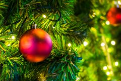Decoration on Christmas day with red ball. Hanging on chrismas tree Stock Photos