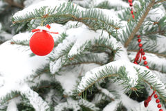 Decoration in a christmas tree. With snow Royalty Free Stock Images
