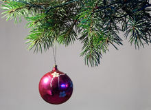 The decoration of Christmas trees. Stock Photos
