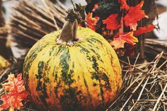 Decoration with colorful green and yellow pumpkin and hay Stock Photo