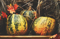 Decoration with colorful green and yellow pumpkins and hay Royalty Free Stock Images