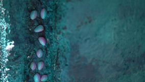 Decoration of the concrete wall of the house with the husk of pistachios. Decoration of the concrete wall of the house, painted with turquoise paint and with the stock video footage
