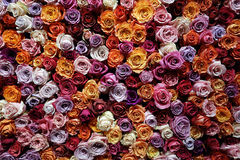 Countless roses Stock Photography