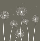 Decoration with dandelions Stock Photos