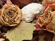 Decoration of dried flowers. Royalty Free Stock Photos