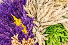 Decoration of dried flowers Stock Photos