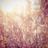 Decoration dried flowers with retro filter Royalty Free Stock Photo