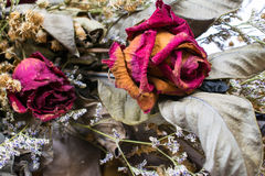 Decoration of dried flowers. Roses. A dried rose depicted Stock Photo
