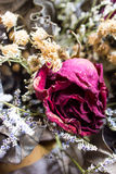 Decoration of dried flowers. Roses. A dried rose depicted Stock Photos