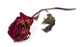 Decoration of dried flowers. Roses. Stock Photo