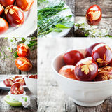 Decoration Easter Eggs with Natural Fresh Stock Photography