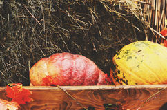 Decoration in farmhouse style with colorful pumpkins and hay Stock Images