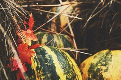 Decoration in farmhouse style with colorful pumpkins and hay Royalty Free Stock Image