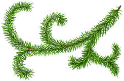 Decoration fir branch for Christmas wreath. Green pine branch. Illustration in vector format Royalty Free Stock Photography
