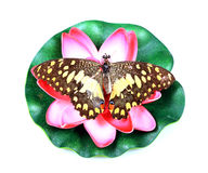 Decoration flower and butterfly Royalty Free Stock Images