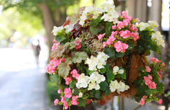 The decoration of the flower of the sidewalk side. Scenery of the decoration of the colorful flower of the sidewalk side Stock Photography