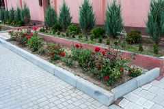 Decoration of the flowerbeds. Old tree roots in the decoration of the flowerbeds in the park stock images