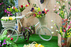 Decoration of flowers in the studio and white bicycle Royalty Free Stock Images