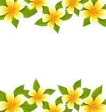 Decoration frame made in frangipani (plumeria), ornament Royalty Free Stock Image