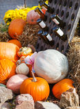 Decoration of fresh different pumpkin Royalty Free Stock Photography