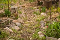 A path in a country yard in spring. Village design. Stones, grass. Decoration of a garden in a counrty stile. Village like rusty pot Stock Photos