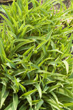 Decoration grass Royalty Free Stock Photos