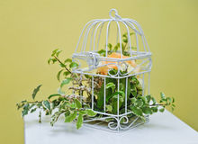 Decoration with green plant in a bird cage Stock Images